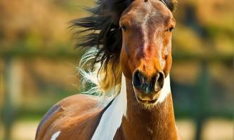 Дивовижні факти про коней