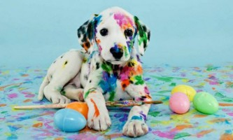 10 Хибних фактів про собак, в які ми всі віримо