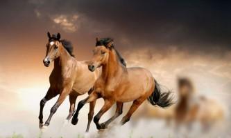 10 Пізнавальних фактів про коней