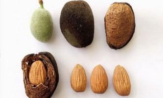 10 Продуктів харчування, які існують завдяки стародавній генної інженерії