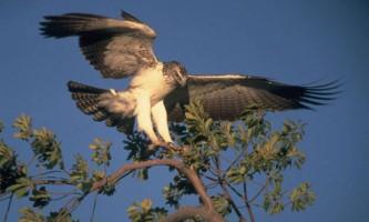 10 Найбільших птахів на землі