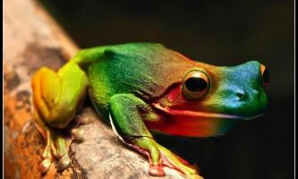 10 Самих дивних жаб в світі