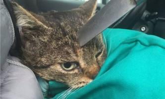 У криму ветеринари врятували кота, якого вдарили ножем в голову