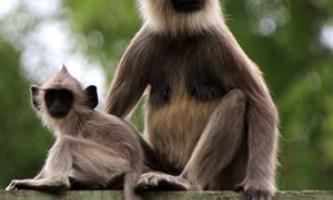 10 Самих жорстоких матерів в світі тварин