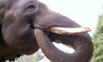 10 Тварин, які вміють говорити