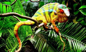 10 Тварин з найяскравішою забарвленням