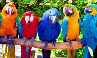 100 Тисяч доларів для папуг: заповіт мільйонерки з нью-йорка стало світовою новиною