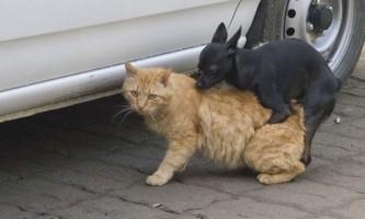 123-Сантиметровий кіт потрапив до книги рекордів гиннесса