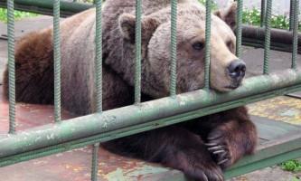 15 Серпня о зоопарку челябінська відзначать день ведмедів-ласунів