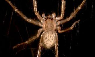 Чому павуки здатні повзати по будь-якій поверхні
