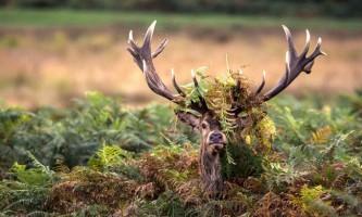 Переможці конкурсу фотографій дикої природи nature photography awards