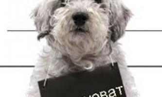 18 Самих грубих помилок собаківників у вихованні щеняти.