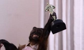 20-Літню мавпу нагородили за внесок у кінематограф