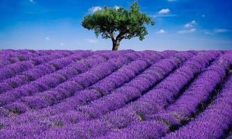 П`ять найкрасивіших квіткових садів і парків світу