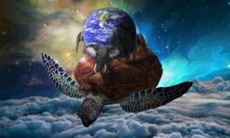23 Травня - день черепахи!