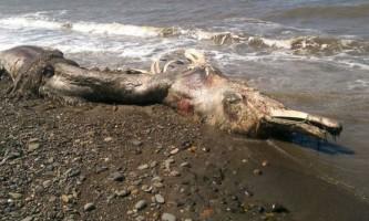Знайдені викопні останки предків річкових дельфінів