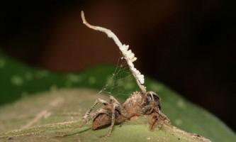 25 Дивовижних фактів про мурах