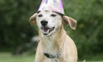 28-Літній пес макс, можливо, найстаріший пес у світі