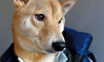 3-Літній пес в курсі останніх модних тенденцій