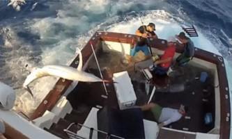 300-Кілограмовий марлин застрибнув у човен до рибалок