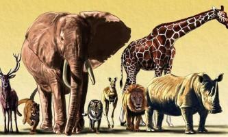 4 Жовтня весь світ відзначає день захисту тварин