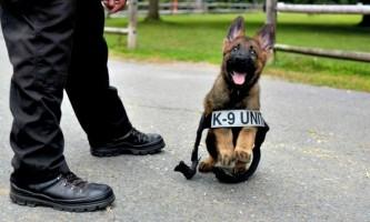 5 Головних правил дресирування поліцейської собаки