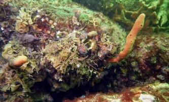 500 Нових видів тварин виявлені вченими у водах охотського моря