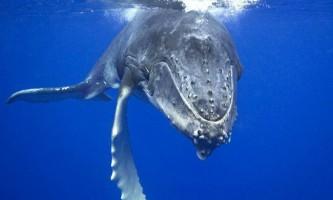 52-Герца - пісня самого самотнього кита