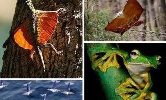 7 Дивовижних безкрилих літаючих тварин