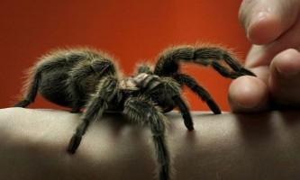 8 Унікальних павуків