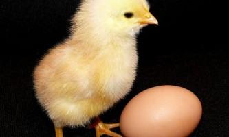 Яйця птахів змінилися після вимирання динозаврів