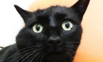 Абсцес у кішки і його лікування