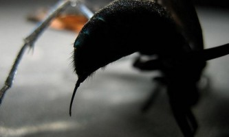 Пекельний біль: як виглядає укус тарантулового яструба (+12)