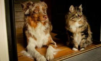 Аферист з вологди міняв породи кішок і собак за допомогою фарби та клею