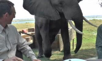 Африканський слон атакував снідали туристів