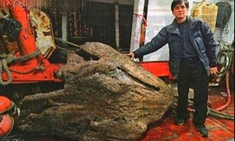 Агарове дерево - найдорожче дерево в світі
