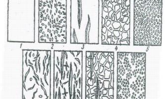 Агротехніка огірка у відкритому грунті