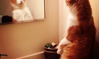 Фахівці пояснили, чому кішки все перекидають