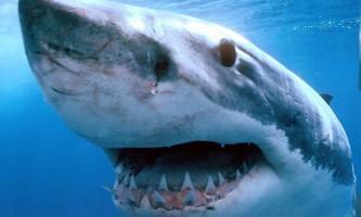 Акула напала на підлітка-серфінгіста