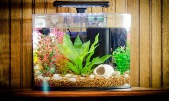 Акваріум з рибками - з чого почати?