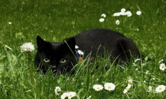 Альбен з: інструкція із застосування для кішок