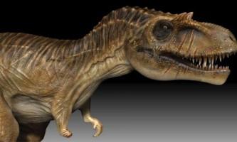 Альбертозавр - «ящір з альберти»
