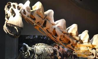 Аллозавр (allosaurus) - один з найбільших динозаврів в світі