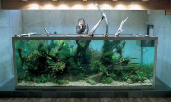 Амано такаші - засновник ідеї природного акваріума