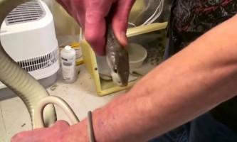 Американець дозволив отруйних змій вкусити себе 160 разів