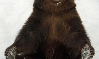 Зимові забави баварських ведмедів