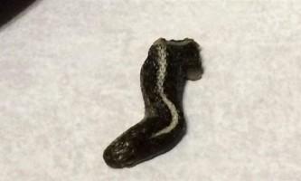 Американка знайшла змію в банку з консервами