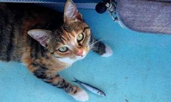 Американка привчила кішку до життя моряка