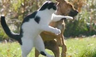 Американка застрелила агресивного кота