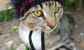 Американська художниця захопилася в`язанням шапочок для котів